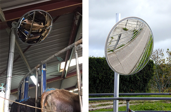 Dairy Shed Mirror